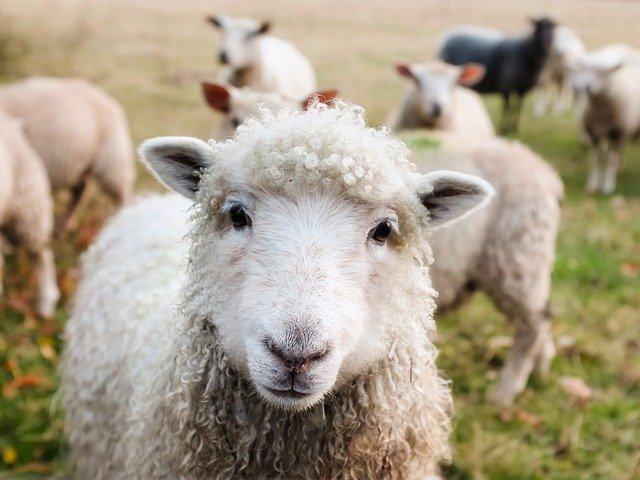 The sheep mentality may kill your business.